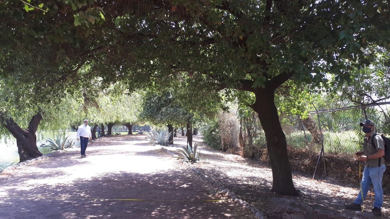 Conocer a los árboles: el Modelo i-Tree en la Laguna de San Baltazar