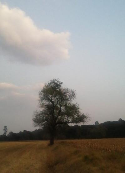 Aprender de los árboles / Sergio Mastretta