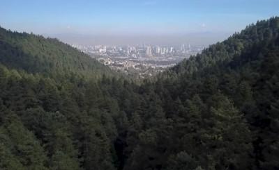 Salvar a los bosques es salvar a México / VIDEO