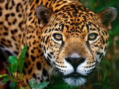 Conoce la flora y fauna a través de la lengua Náhuatl
