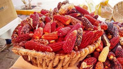 Día Nacional del Maíz: San Juan Ixtenco: por el maíz, la fiesta de los campesinos